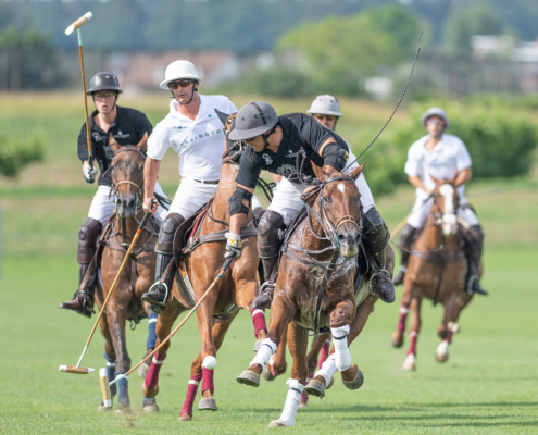 KENSINGTON_Polotrophy